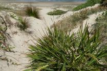 Beach access from the park