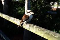 One of the regular visitors to our park